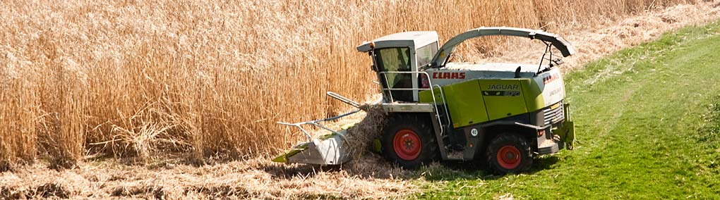 Harvesting Miscanthus